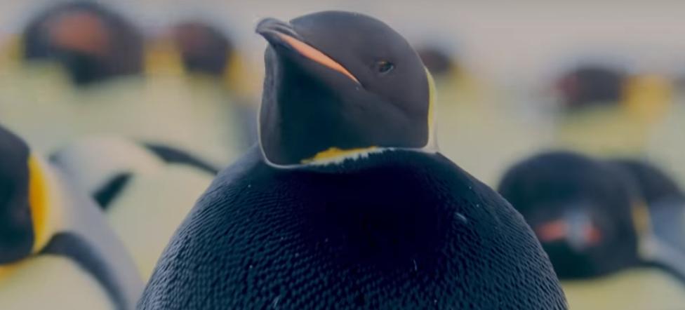 ¿Podría ser este el pingüino más raro del planeta?