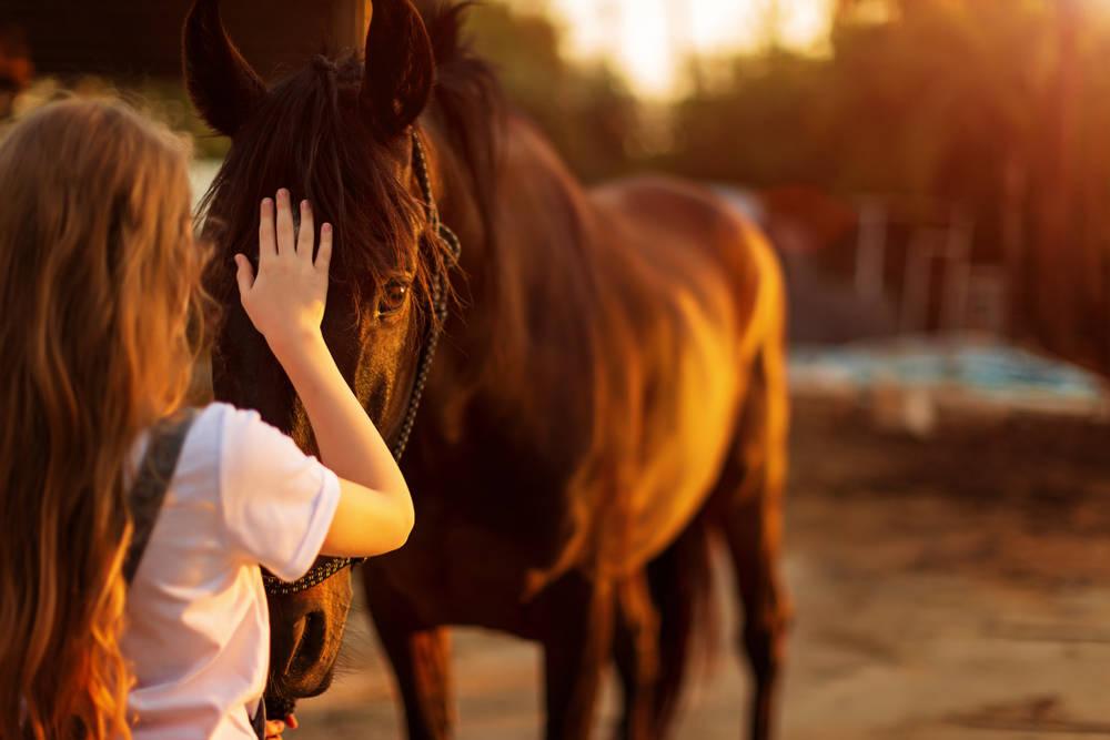 """Fue nombrado """"El caballo más hermoso del mundo"""". Pero lo que descubrieron.."""