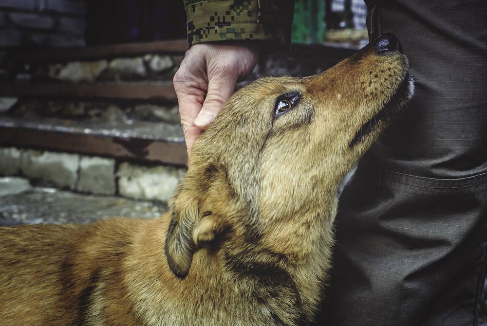 Héroes de los perros: la pareja que ayuda a los callejeros durante la cuarentena