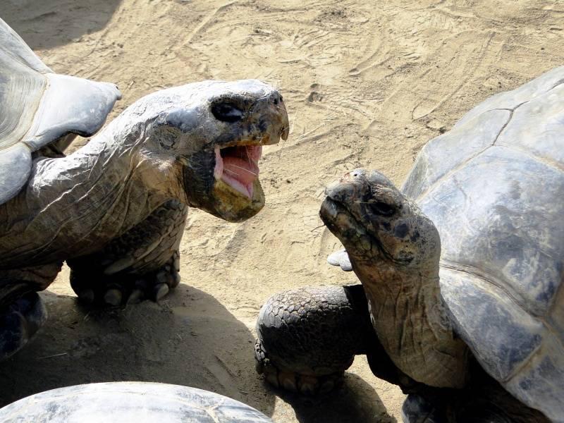 El matrimonio de estas dos tortugas acaba tras 115 años