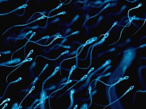 Sexualidad masculina: así cambia el esperma a través de los años