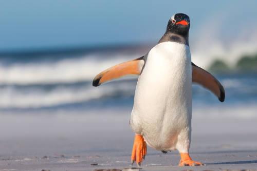 Los agarraron infraganti: la fotografía de los pingüinos que se ha vuelto viral
