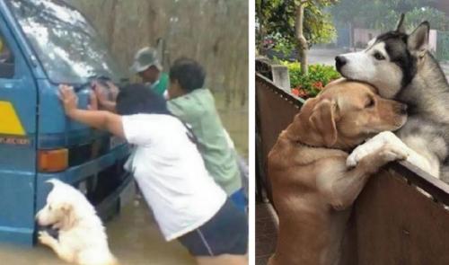 21+ fotografías de animalitos que te harán morir de ternura