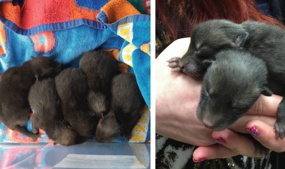 Creyó haber salvado 5 perritos abandonados pero resultaron ser una especie di..