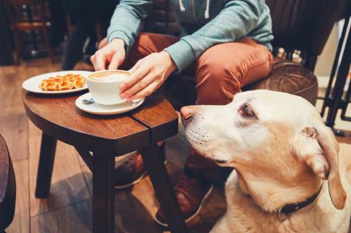 Una pareja abre un café de perros en donde puedes adoptarlos
