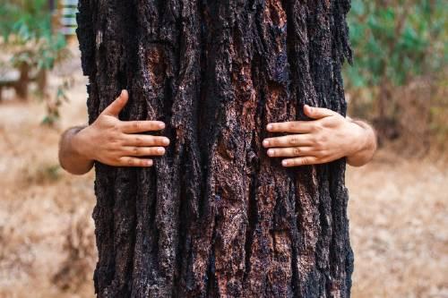 Descubre en qué países se disputan el récord Guinness de plantar más árboles que nadie