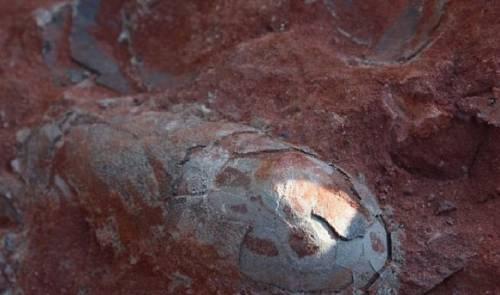 Encuentran huevos de dinosaurios bien conservados de hace 120 millones de años