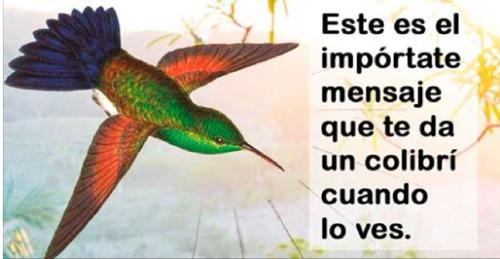 Cuando veas un colibrí dale gracias, te está tratando de decir 1 de estos 9 ..