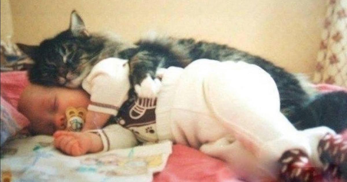 Por estas razones los gatos suelen descansar sobre nuestro cuerpo