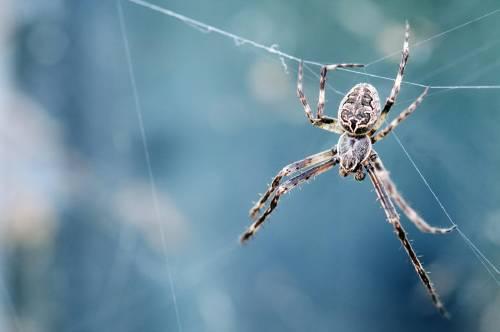 Cientos de arañas caen del cielo en Brasil