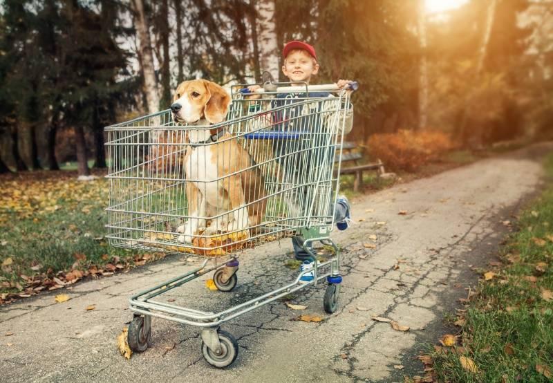 Por qué Inglaterra prohibió la venta de cachorros en tiendas de mascotas