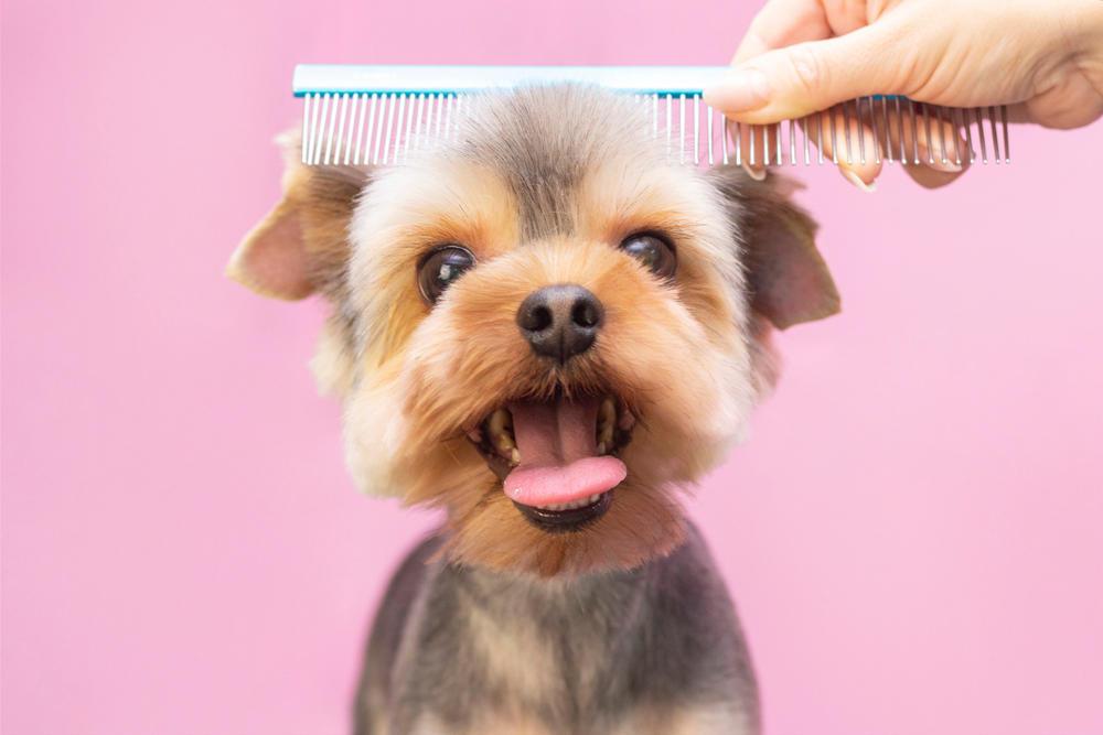 Le corta el pelo a su perro, se arrepiente al instante