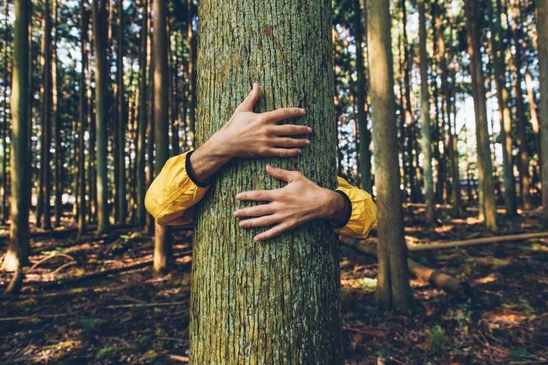 No podrás creer esta red que poseen los árboles para conversar entre ellos