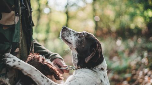 Si tu perro te pone la pata encima, podría esta diciéndote esto: