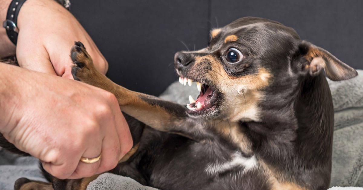 Lenguaje canino: 7 señales que anticipan que van a morder