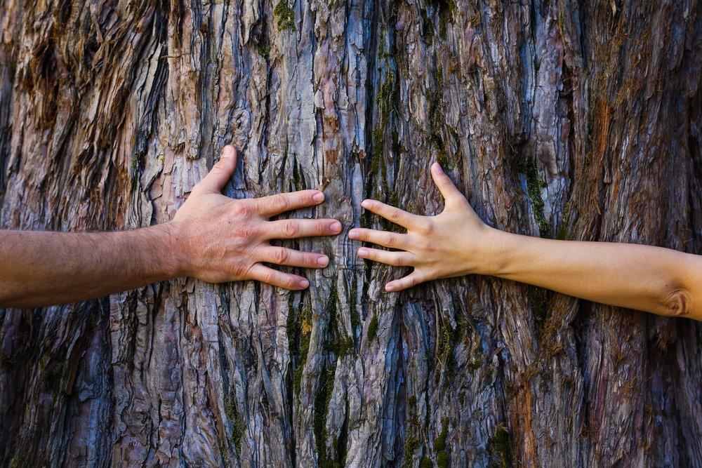 Cuántos árboles hay en la Tierra