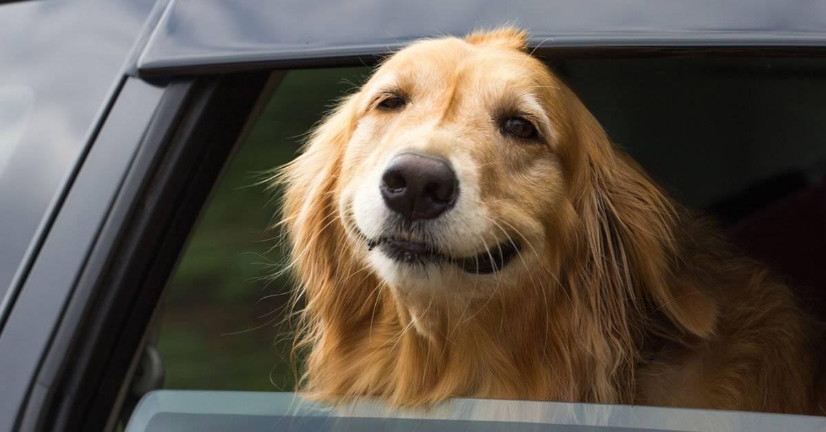 Tesla lanza el modo perro en sus coches para evitar más muertes