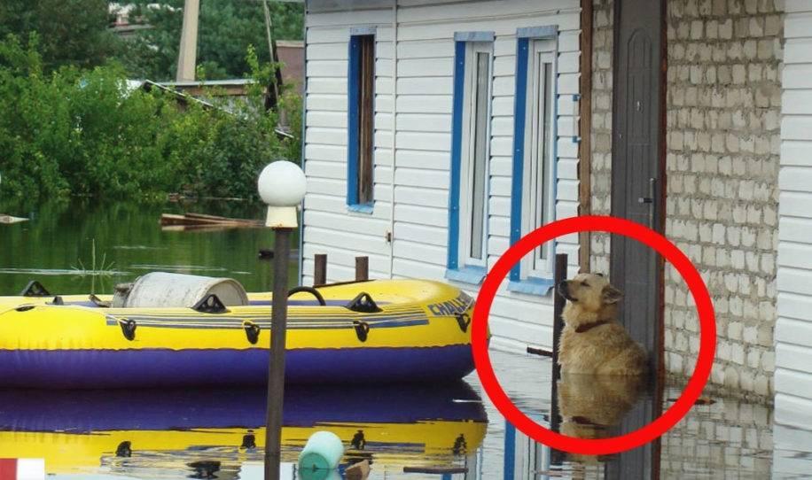 Lo que hizo este perro durante una inundación te dejará sin aliento