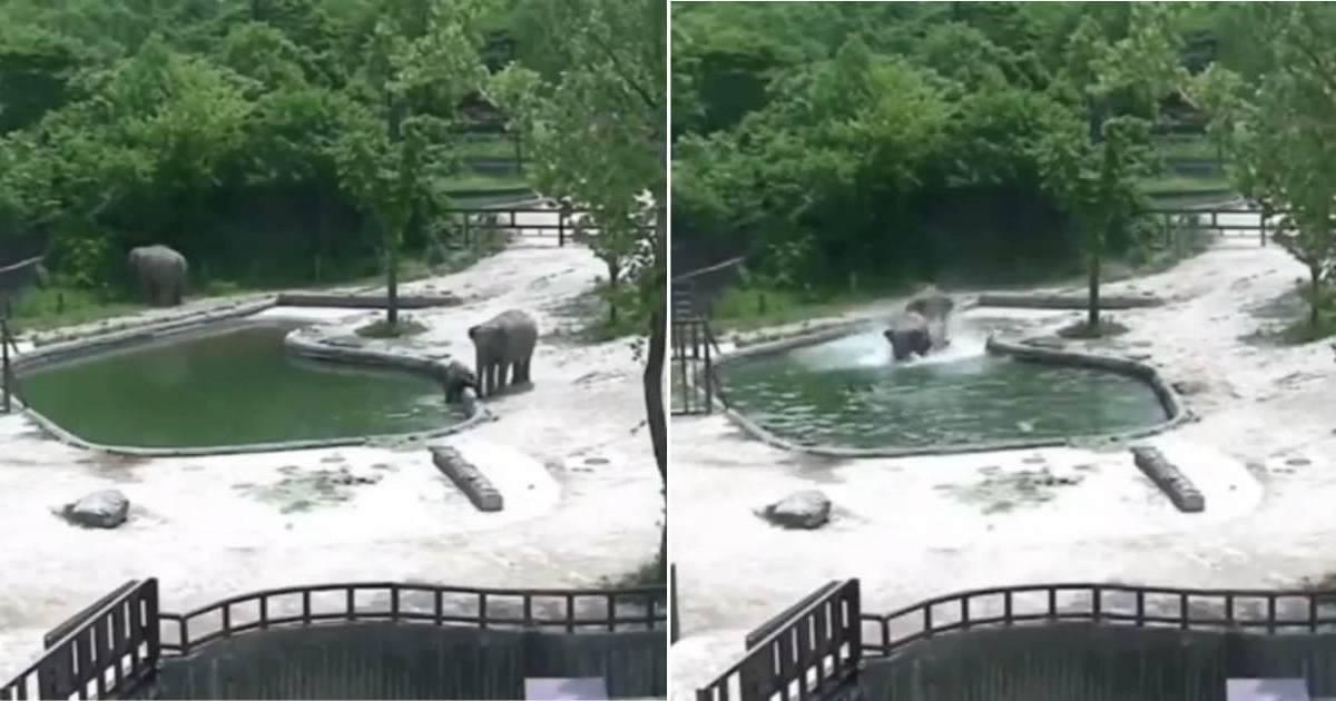 Estos dos elefantes corren para evitar la muerte de una cría al caer accident..