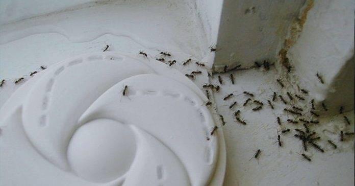 Las hormigas ya no serán un problema esta temporada