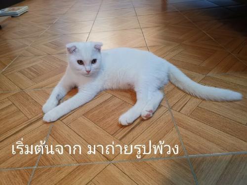 cat-white-736x552