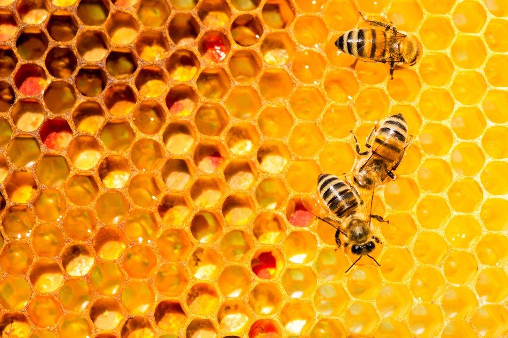 abeja-panal