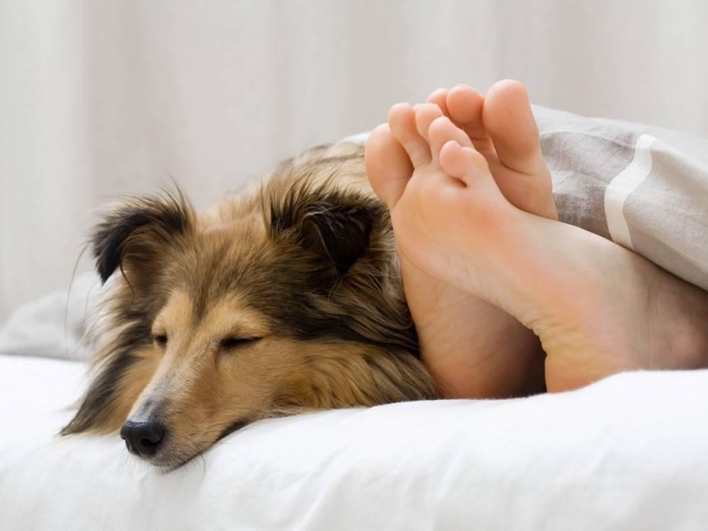 ¿Es bueno dormir con tu perro? Esto dice la ciencia