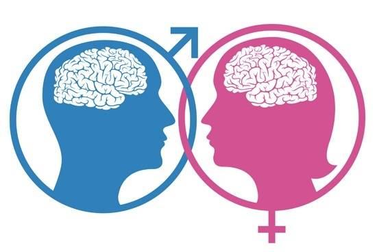Diferencias cerebrales femeninas y masculinas
