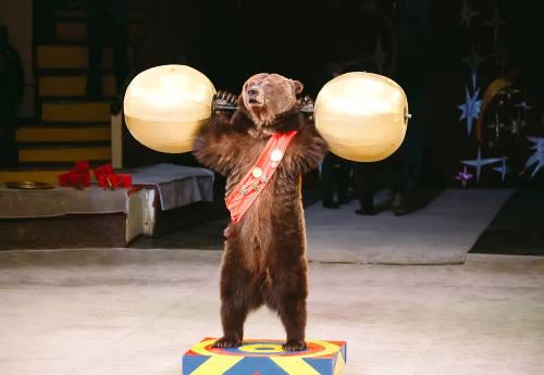 Francia prohibirá el uso de animales salvajes en los circos