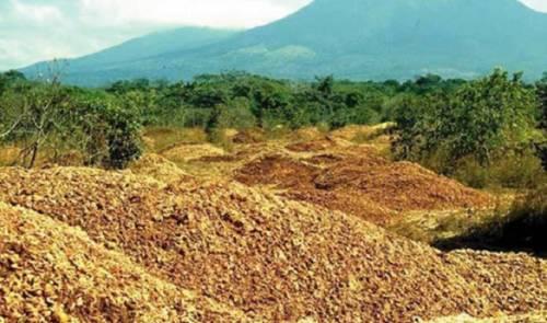 Miles de cáscaras de naranjas fueron arrojadas en una área deforestada. así..
