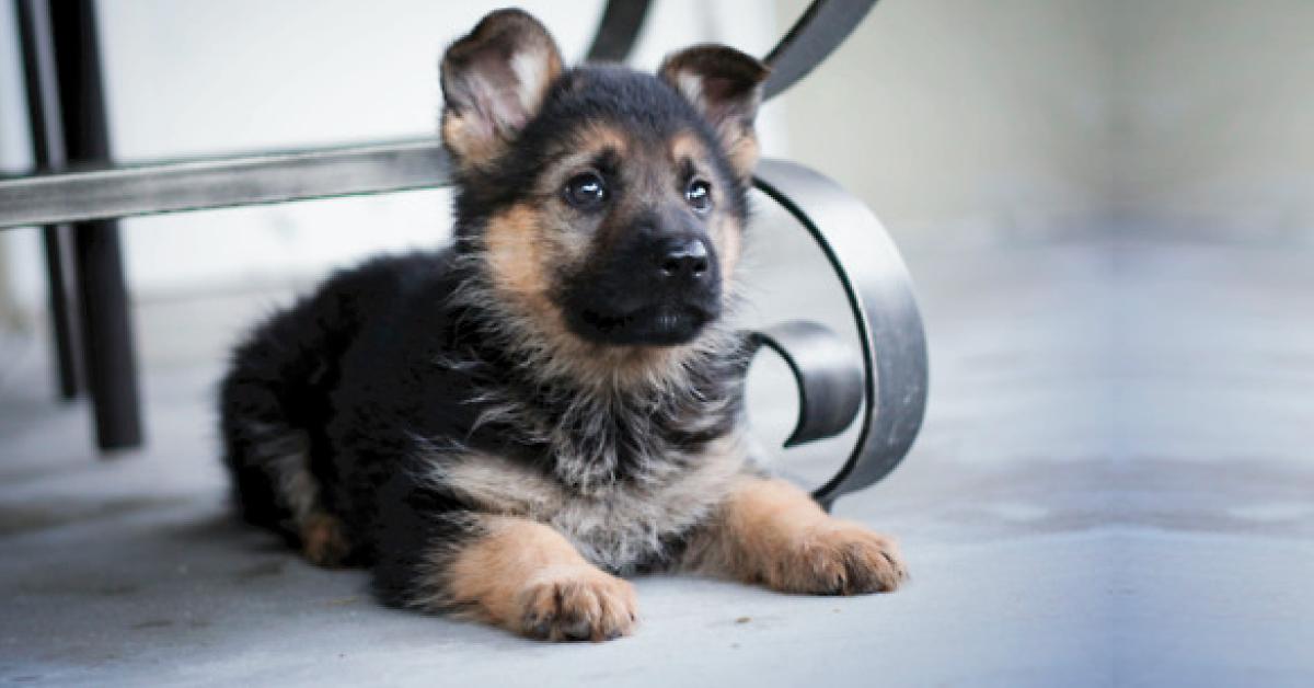 Los perros son capaces de detectar cuando alguien es una mala persona, esto no..