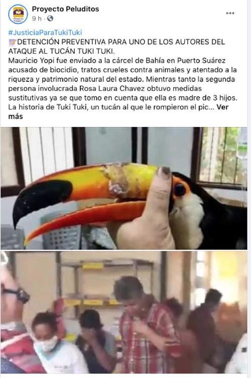 tucan-bolivia-maltrato-dolor-prision-culpables-selva0000