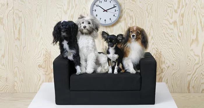 Lanzan colección de muebles para mascotas, los amantes de los animales las va..