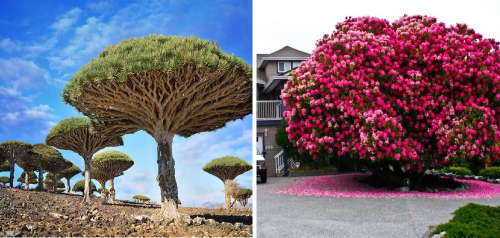 16+ fotos de los árboles más exóticos del planeta