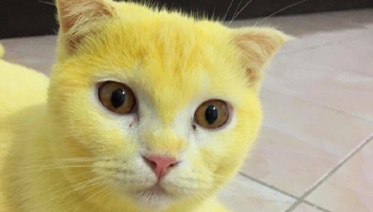 cat-1-828x472