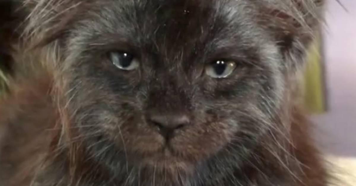 Gato con un rostro casi humano se vuelve viral, y jamás podrás olvidar su cara